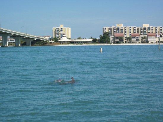 Clearwater Marine Aquarium: Dolphin sighting