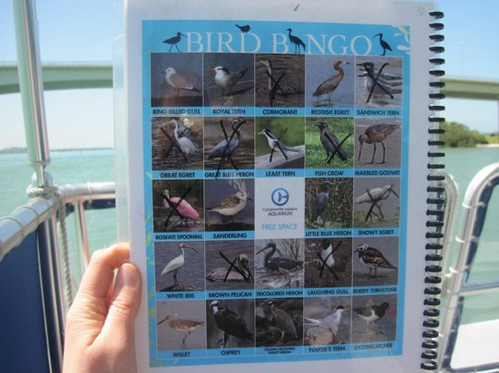 Clearwater Marine Aquarium: Bird Bingo