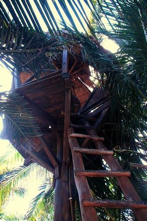 La Buena Vida Restaurant : Treehouse  - enter at your own risk sits 4 only