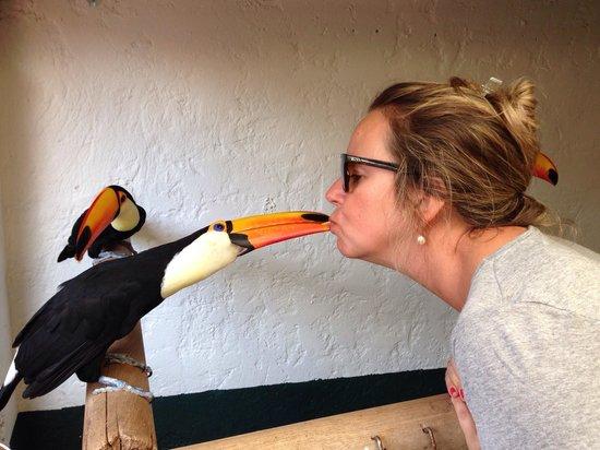 El Tucan: Alimentando o tucano!!!