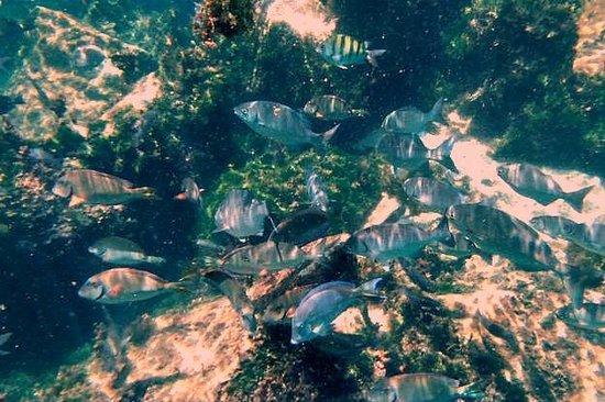 Yal-ku Lagoon: Fish