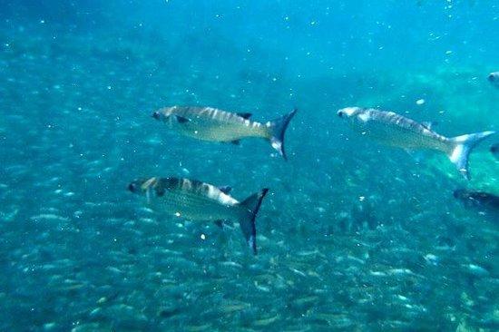 Yal-ku Lagoon: more fish