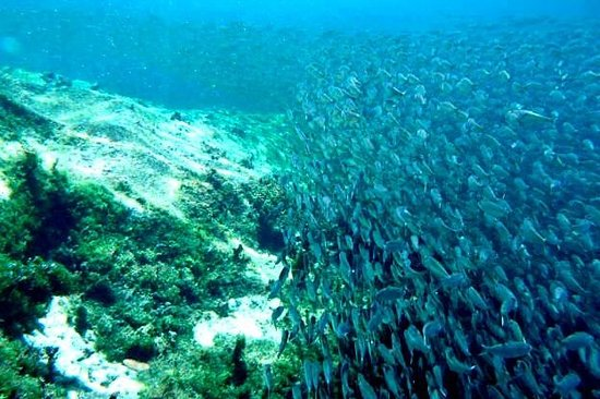 Yal-ku Lagoon: Thousands of sardines