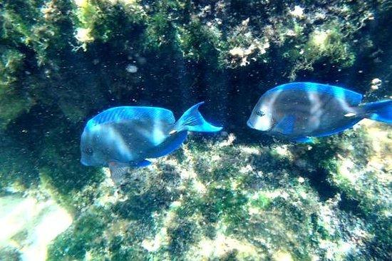 Yal-ku Lagoon: Pretty Blue fish
