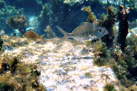 Yal-ku Lagoon: Silver grey fish