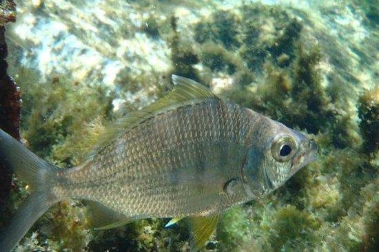 Yal-ku Lagoon : Fish
