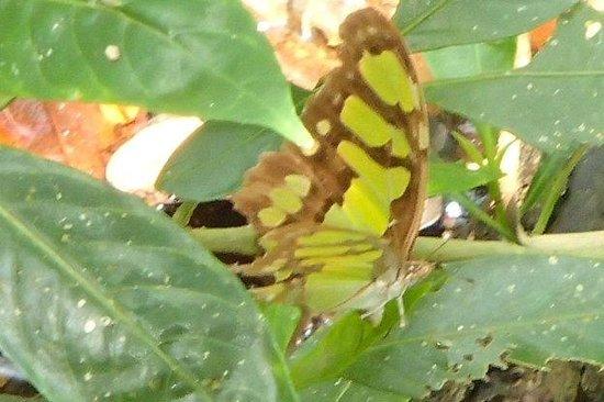 Muyil : Butterfly