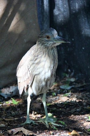 Seaside Seabird Sanctuary: bird sanctuary