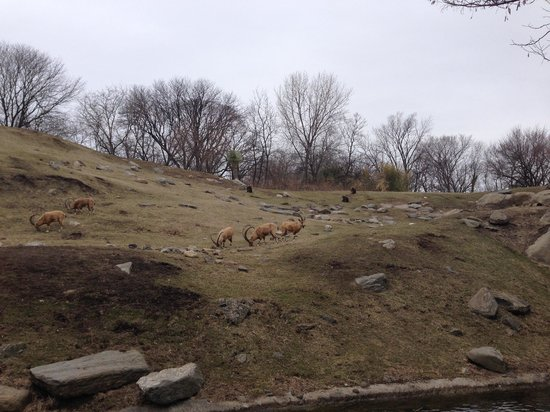 Bronx Zoo: One of the big open areas