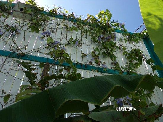 Seven Seas Resort: Plants