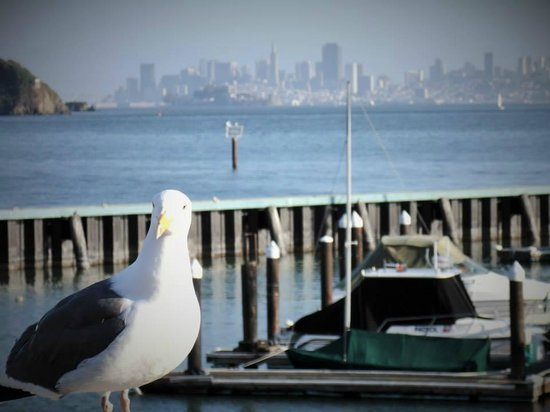 Waters Edge Hotel: The view from the deck of the Water's Edge Hotel. SF skyline, Corinthian Yacht Club and a friend