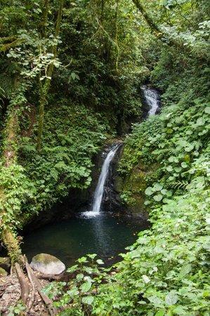 Monteverde Cloud Forest Biological Reserve : waterfall