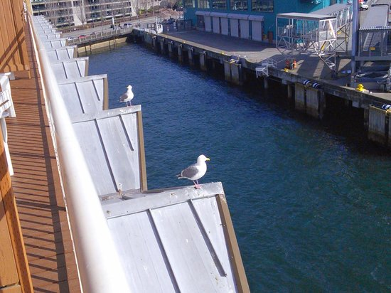 The Edgewater, A Noble House Hotel: seagull