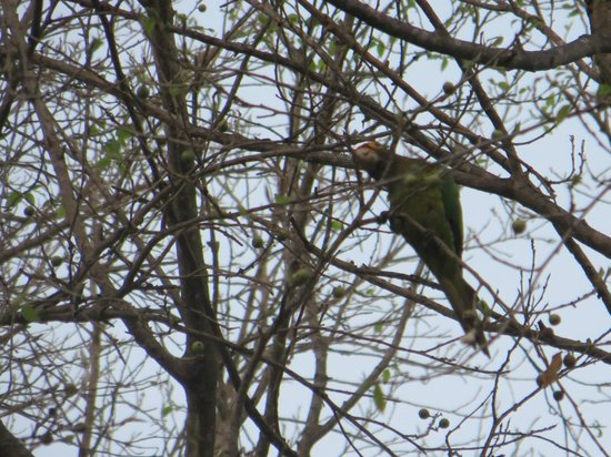 Park Royal Huatulco : Birds on walk down to beach