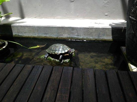 Bhavana Private Villas: turtle