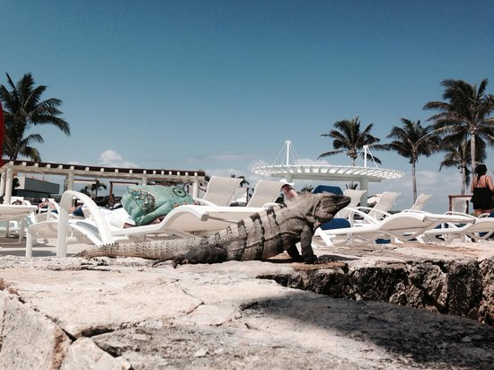 Grand Park Royal Cancun Caribe: Occasional visitor at the pool side