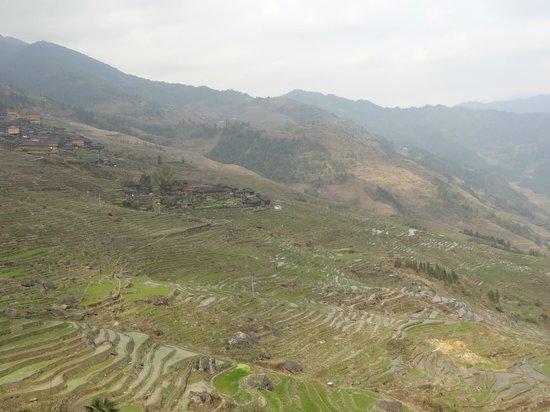 Dragon's Backbone Rice Terraces : 棚田
