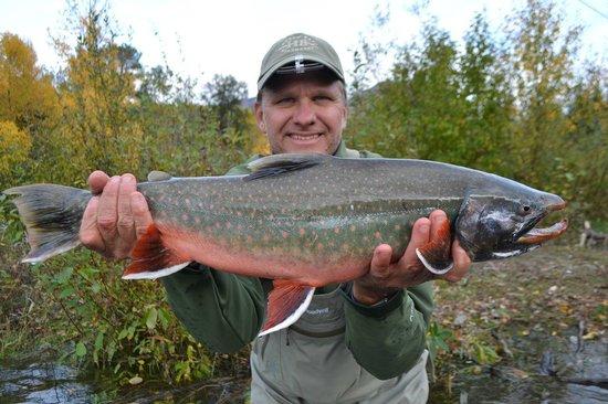 Kenai Experience: An exceptional Dolly Varden from the Kenai River.