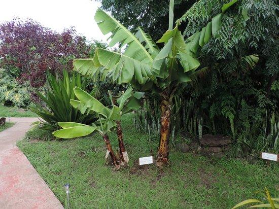 Hotel Rapa Nui : Áreas verdes que caracterizan el ambiente del hotel.