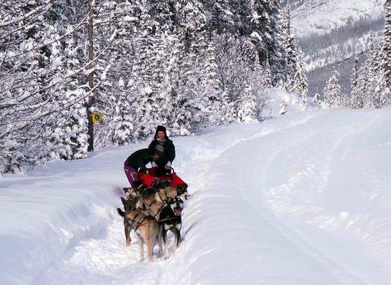 Kingmik Dog Sled Tours: Kingmik Dog Sled Tour homeward bound