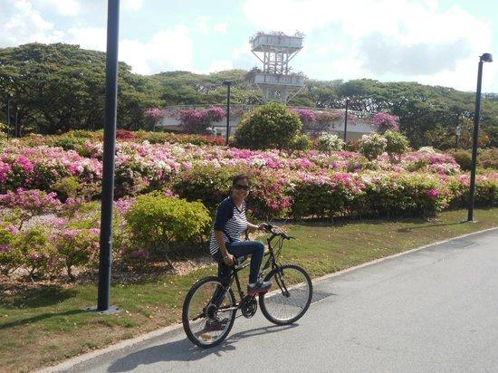 East Coast Park : Lovely gardens