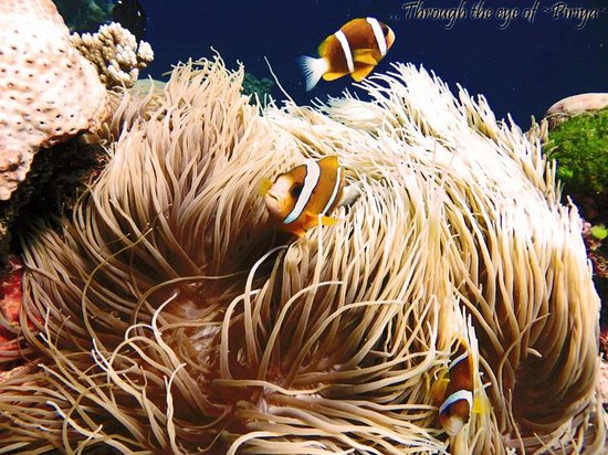 Deep Sea Divers Den Day Trips : welcome to GBR!