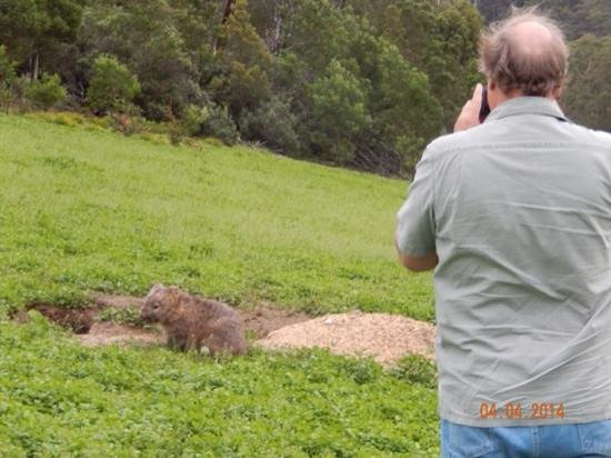 Boutique Tours Australia : Ron taking a picture of a wombat.
