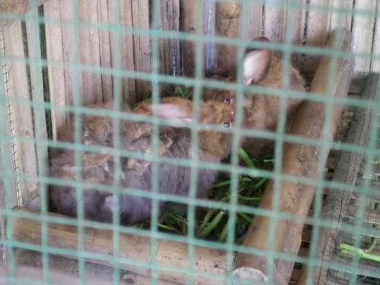 Swasti Eco Cottages : Bad animal handling