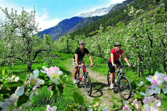 Vita Aktiv Hotel Der Heinrichshof: Tolle Fahrradwege ab dem Hotel