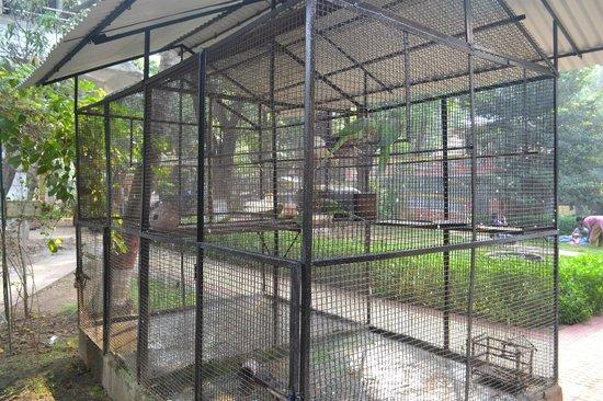 Jogalekar Cottage : Birds