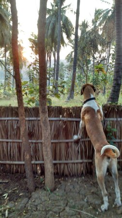 Goan Corner: View from our cottage and one of the gorgeous dogs monkey spotting :)