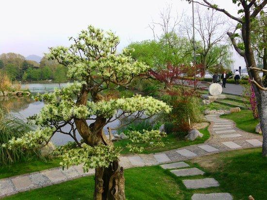 Jinjiang Inn Nanjing Railway Station First: 200 Bonsai trees at the botanical gardens