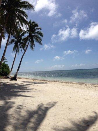 Anda White Beach Resort : the beach
