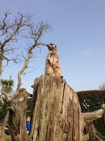 Drusillas Park: Meerkat lookout