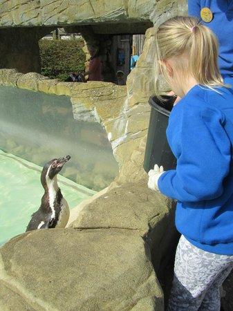 Drusillas Park: Feeding Slasher the Penguin