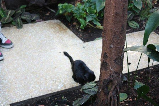 Artis Zoo: Scimmietta