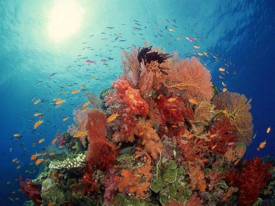 Sinai Safari Adventures : Tiran Island - reef stunning!!