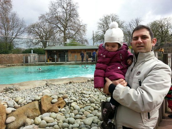 ZSL London Zoo: La nuova vasca dei pinguini