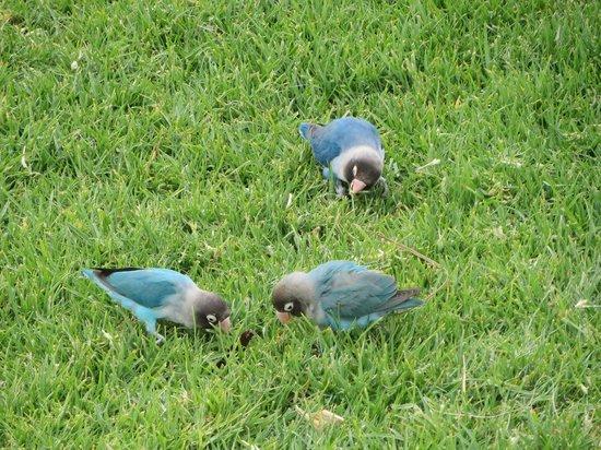 H10 Rubicon Palace: free range birds
