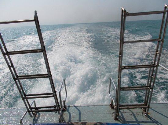 Blue Stars Kayaking: Heckwelle
