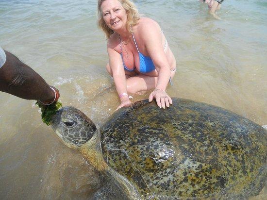 Hikka Tranz by Cinnamon: Feeding the turtles