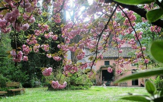 Mulino Dei Marchesi Eroli: mulino in fiore