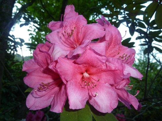 Mulino Dei Marchesi Eroli: rododendro