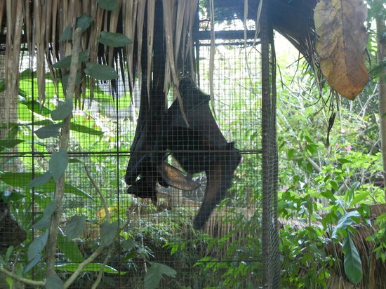 Negari Coffee: Bats