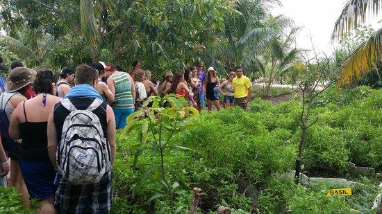 Bravo Caracol: Garden Tour - Organic Restaurant & Gardens