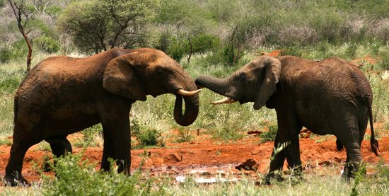 Madikwe Hills Private Game Lodge: Elephants at the watering hole in front of the lodge
