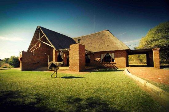 Monateng Safari Lodge: Chalet