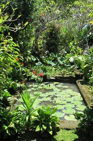 Cafe Wayan & Bakery : Beautiful gardens