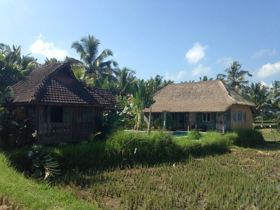 Hati Padi Cottages: View from the paddy fields of 2 of the chalets in Tanah Cinta.