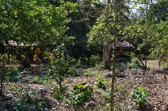 Nature's Nest : Cashew Plantation